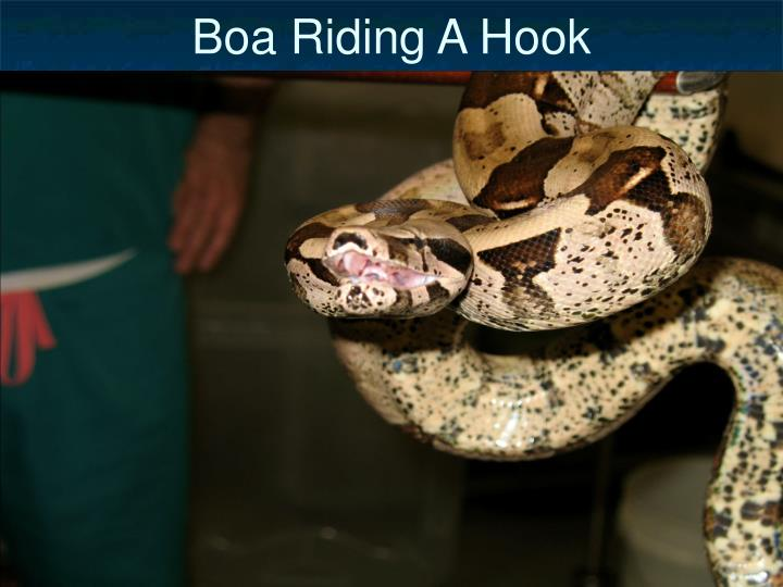 Boa Riding A Hook