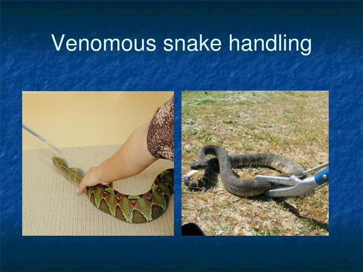 Venomous snake handling