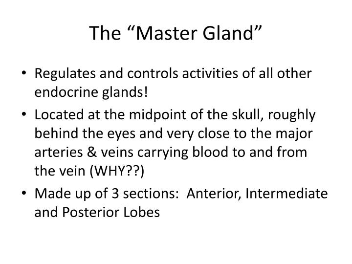 "The ""Master Gland"""