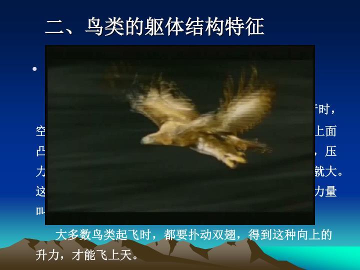 二、鸟类的躯体结构特征