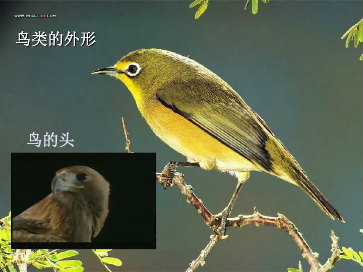 鸟类的外形