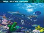 a food web shows a complex network of feeding relationships1