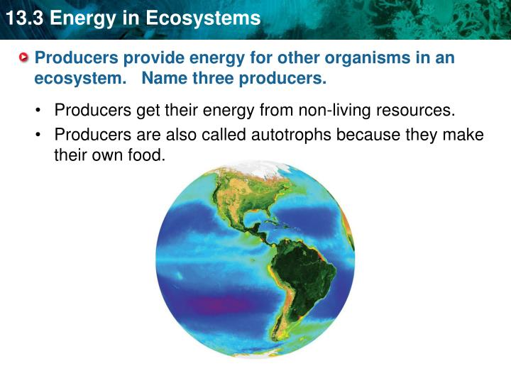 Producers provide energy for other organisms in an ecosystem.   Name three producers.