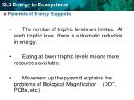 pyramids of energy suggests