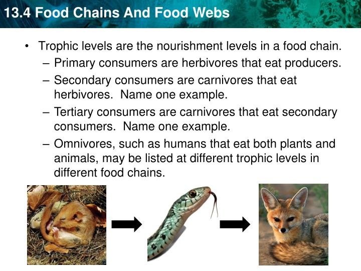 Primary consumers are herbivores that eat producers.
