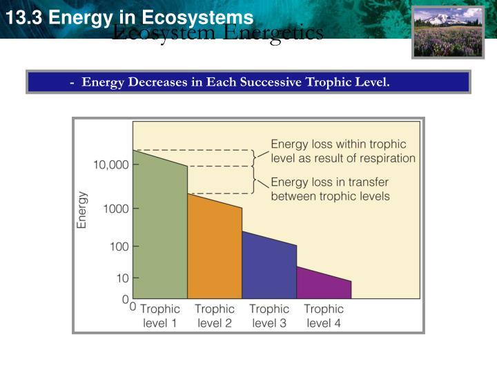 Ecosystem Energetics