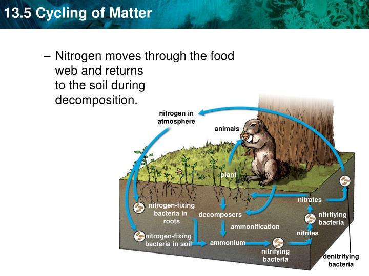 nitrogen in