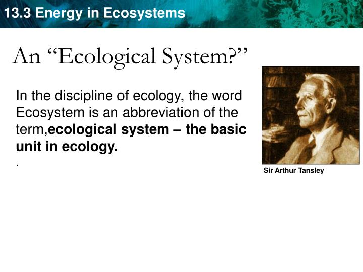 "An ""Ecological System?"""