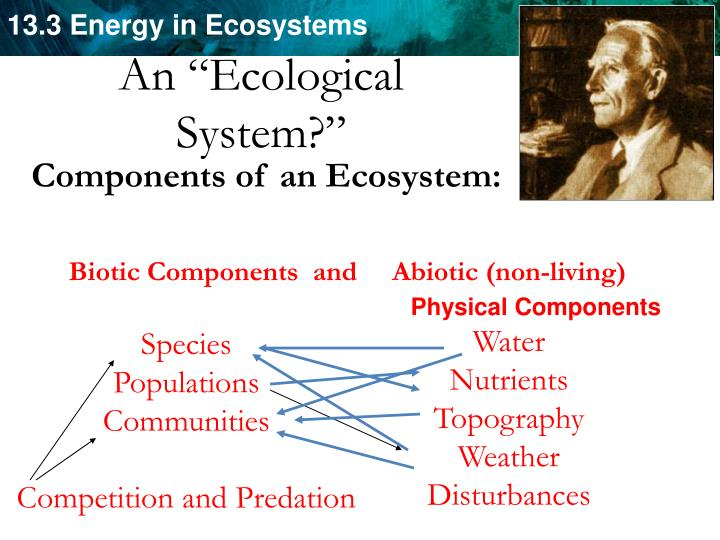 "An ""Ecological"