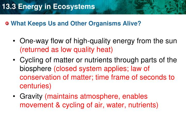 What Keeps Us and Other Organisms Alive?