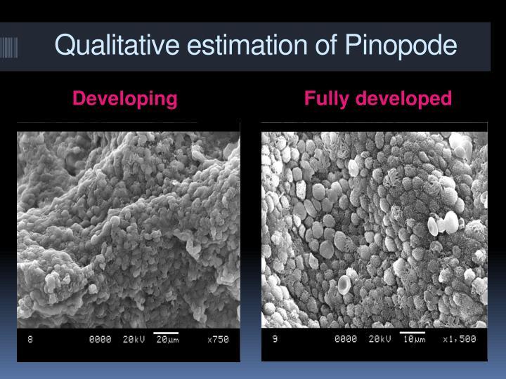 Qualitative estimation of Pinopode