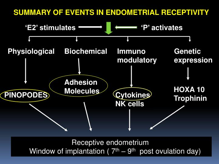 SUMMARY OF EVENTS IN ENDOMETRIAL RECEPTIVITY