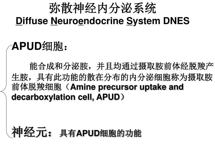弥散神经内分泌系统