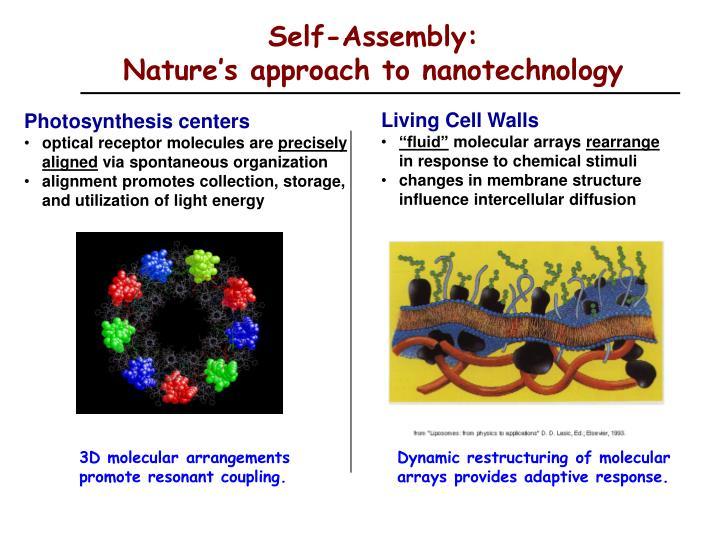 Self-Assembly:
