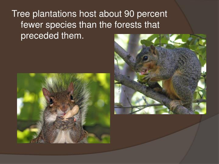 Tree plantations host about 90 percent fewer species than the forests that preceded them.