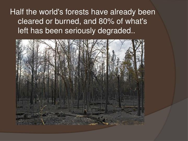 Half the world's forests have already been cleared or burned, and 80% of what's left has been seriously degraded..