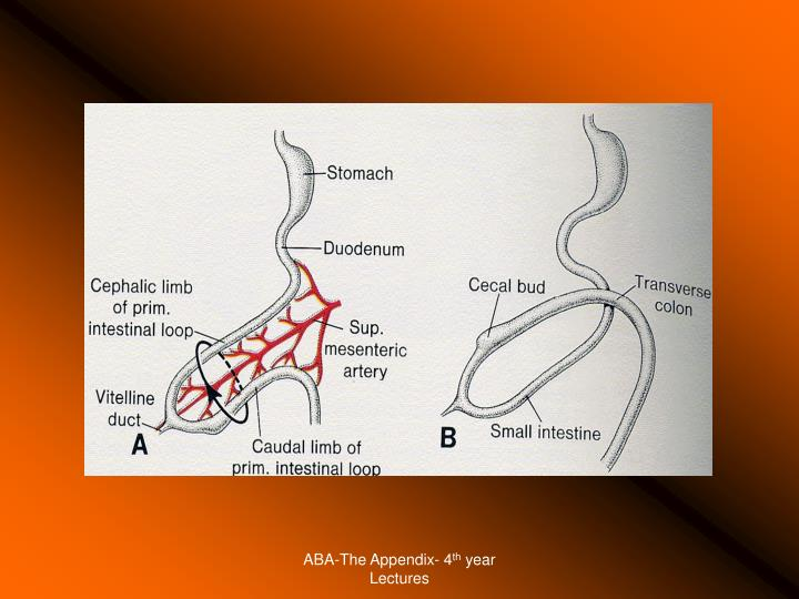 ABA-The Appendix- 4