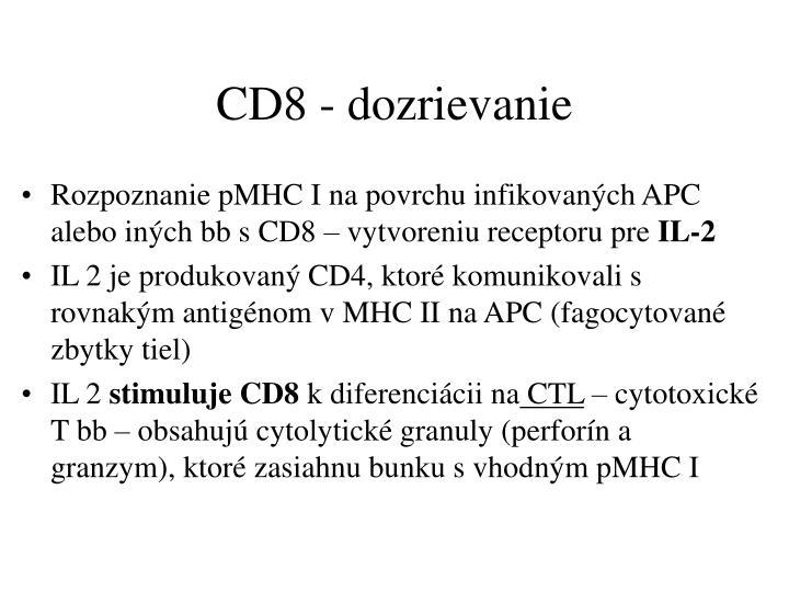 CD8 - dozrievanie