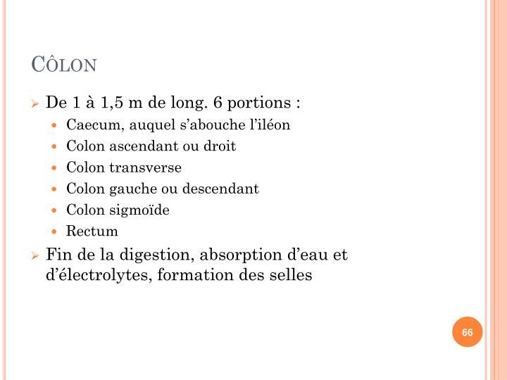 Côlon