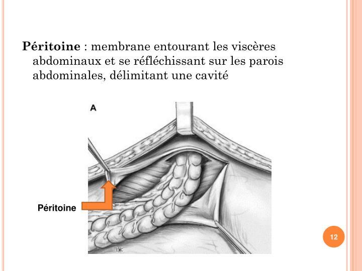 Péritoine