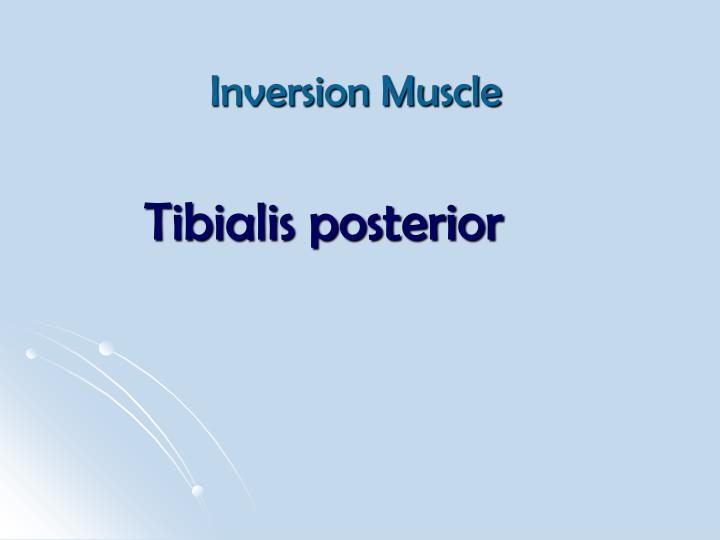 Inversion Muscle