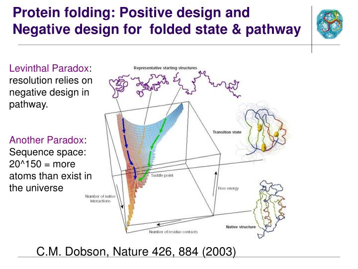 Protein folding positive design and negative design for folded state pathway