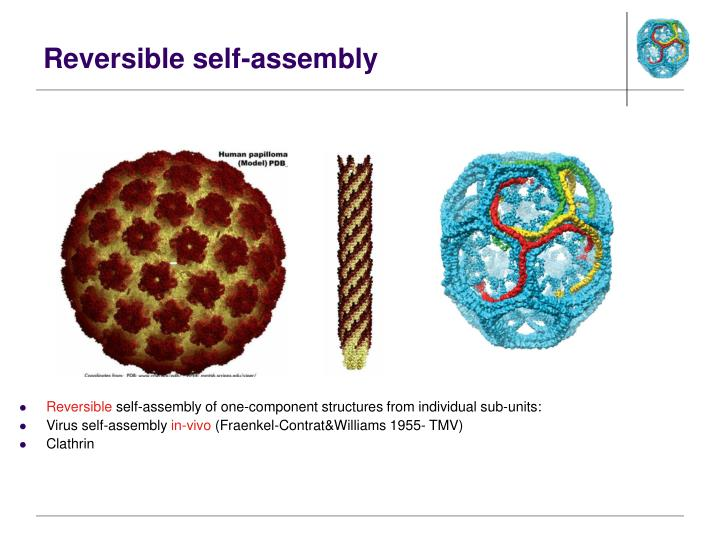 Reversible self-assembly