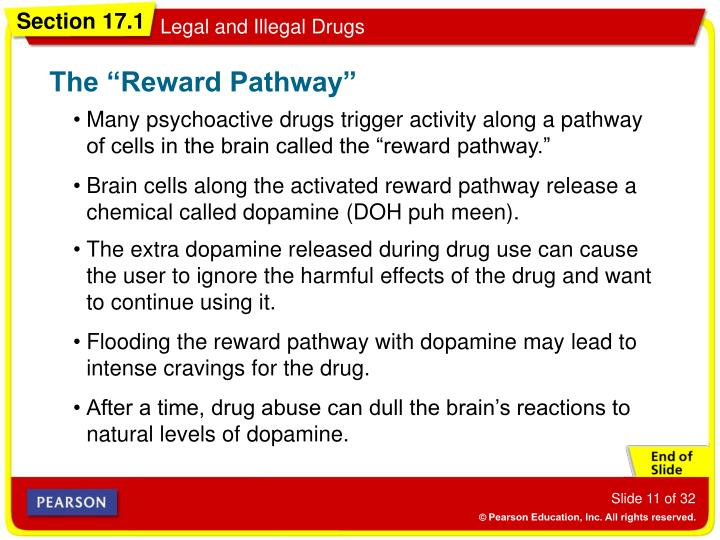 "The ""Reward Pathway"""