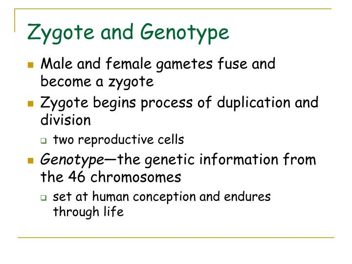 Zygote and Genotype