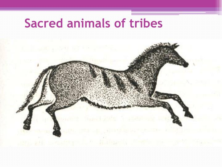 Sacred animals of tribes