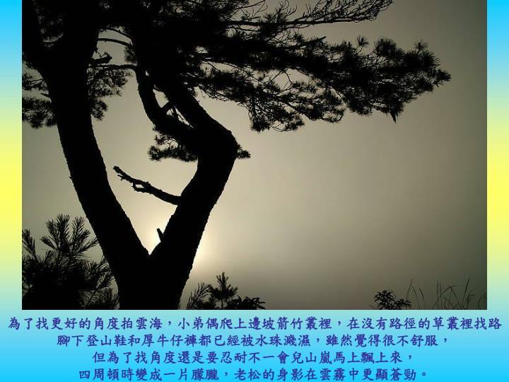 為了找更好的角度拍雲海,小弟偶爬上邊坡箭竹叢裡,在沒有路徑的草叢裡找路
