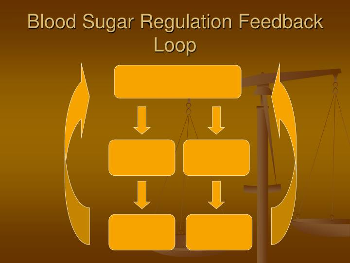 Blood Sugar Regulation Feedback Loop
