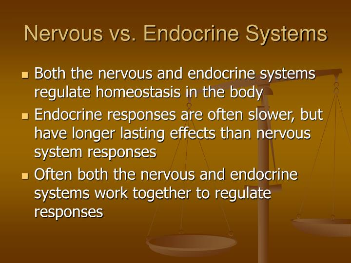 Nervous vs. Endocrine Systems