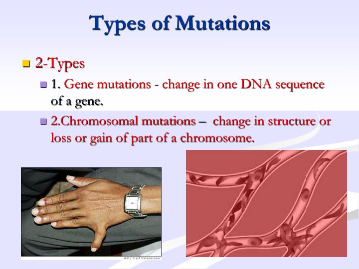 Types of Mutations