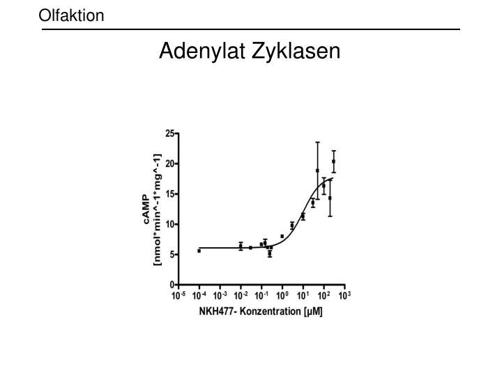 Adenylat Zyklasen