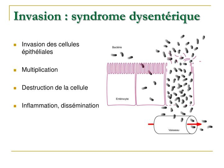 Invasion : syndrome dysentérique