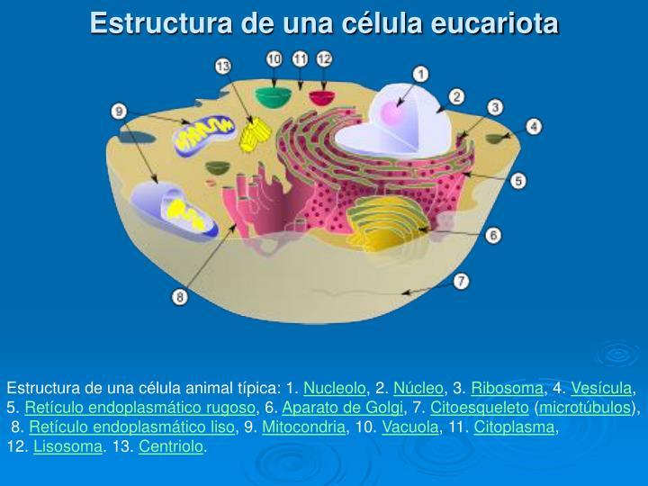 Estructura de una célula eucariota