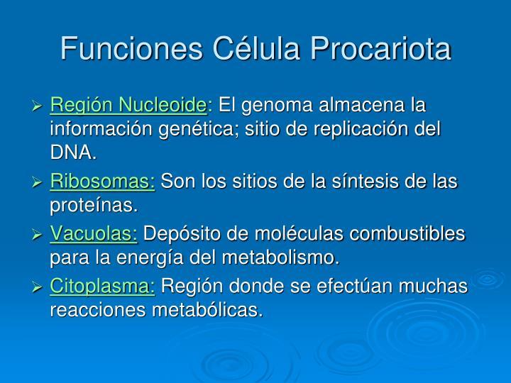Funciones Célula Procariota