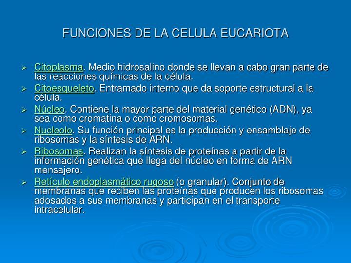 FUNCIONES DE LA CELULA EUCARIOTA