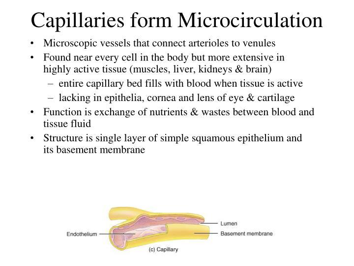 Capillaries form Microcirculation