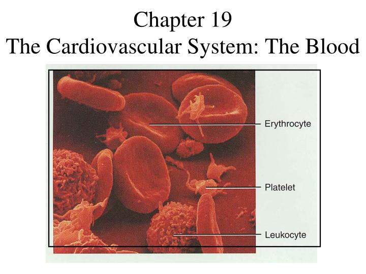 Chapter 19 the cardiovascular system the blood