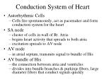 conduction system of heart1