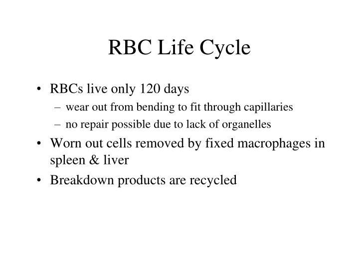 RBC Life Cycle
