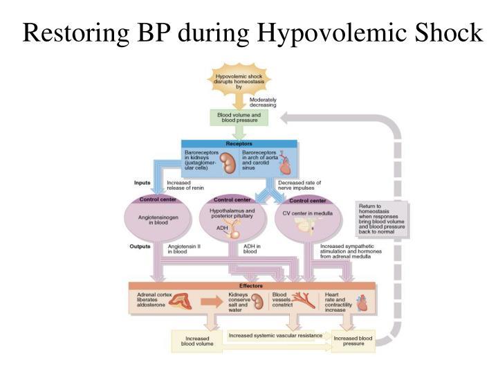 Restoring BP during Hypovolemic Shock