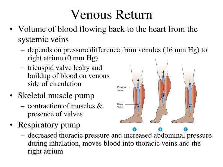 Venous Return