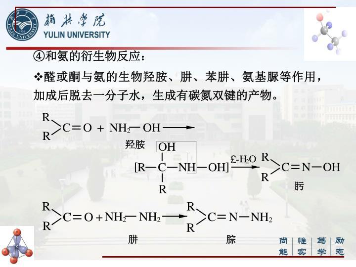 ④和氨的衍生物反应