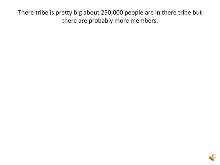 There tribe is pretty big about 250,000 people are in there tribe but there are probably more members.