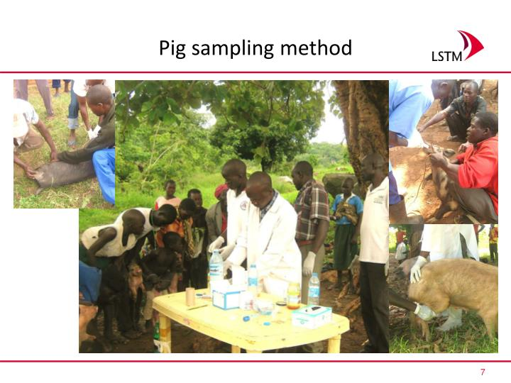 Pig sampling method