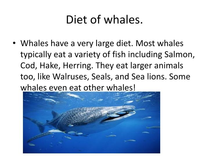 Diet of whales.