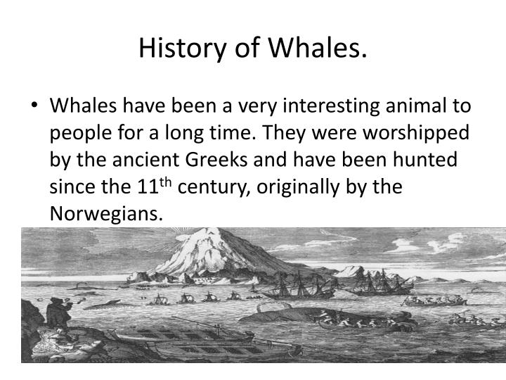History of Whales.